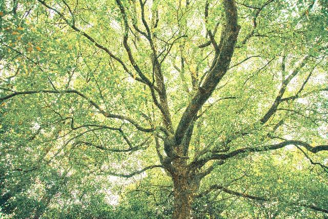 じぶんの木